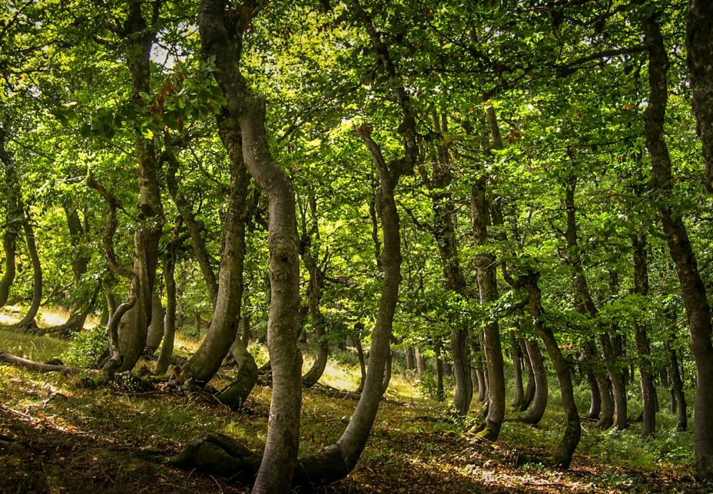 Forest above village Lukomir