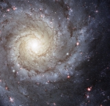 In the new Hubble image of the galaxy M74 we can also see a smattering of bright pink regions decorating the spiral arms. These are huge, relatively short-lived, clouds of hydrogen gas which glow due to the strong radiation from hot, young stars embedded within them; glowing pink regions of ionized hydrogen (hydrogen that has lost its electrons). These regions of star formation show an excess of light at ultraviolet wavelengths and astronomers call them HII regions.